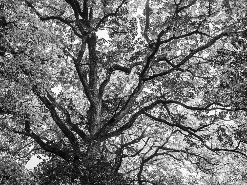 Black and white conversion to focus on the shapes and structure of the trees - Switzerland, Rafael Rojas.jpg
