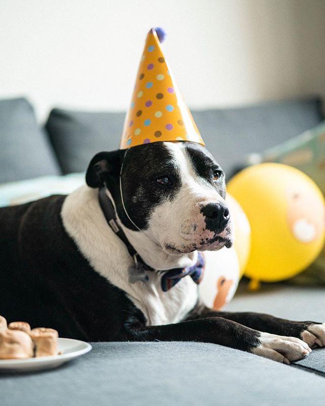 Do you think I took the dog's birthday a little too far... 😂😂😂Happy Birthday Marley 🥰🥰🥰