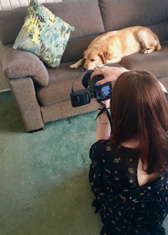 Photographing some cushions with help from a sleepy pupper Lloyd.