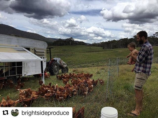 ATTENTION! Our amazing suppliers @brightsideproduce have a request for an awesome cause - please give it a read!  #Repost @brightsideproduce ・・・ Folks we need your help. Back in the long dark nights of winter whilst I was up one witching hour breastfeeding I had the kind of idea you can only have when you're half asleep but need to be up and functional. There's a bit of a story behind it... . Our beautiful niece Matilda contracted viral encephalitis back in 2015 (brain virus). It was a long battle that almost cost her her life, but she pulled through and started to make progress, slowly regaining some of the skills kids her age take for granted. In a cruel twist she then developed anti-NMDA receptor encephalitis (an auto-immune type bizo -I'm not a doctor folks). This has left her with a terrible brain injury... it has changed who she is, what she can do and what her future looks like compared to her peers. It has also left her exhausted Mum and dad in need of a bit of support. . So my idea was to have a flock of chookies and sell their eggs for Matilda. 'Tilly's Chickens'. Michael's family very generously put in for the chickens and infrastructure we needed to get going, we have been putting in the labour.  They are pastured, free range, happy chookies -here they are in their caravan towed by a big red tractor. Now all we need is you, your business, your cafe, your pub, your mate's pub, your public service office, your workplace to put in a WEEKLY ONGOING order for Tilly's eggs so we can get this show on the road.  WE CAN DELIVER ORDERS OVER 12 DOZEN. . Get in touch folks and help a sister out!
