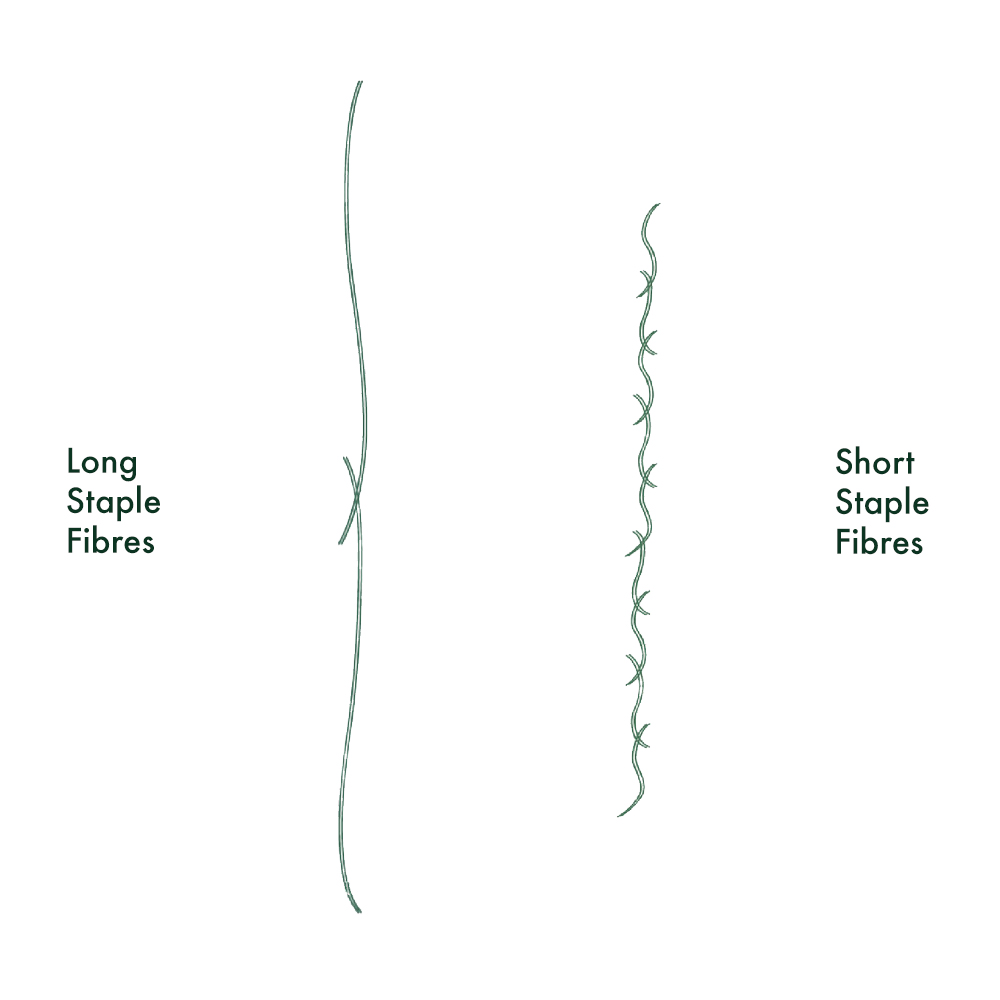 Extra-Long Fibres - In this industry, length and strength is everything. The length of the fibre is one of the main indicators of quality. Our choice of long-staple 100% Egyptian cotton produces the strongest, longest fibres later spun to make the finest, softest weave.Short-staple cotton used by the majority of high-street retailers is naturally weak with many exposed split ends resulting in a weaker fibre and inferior weave that frays and piles.