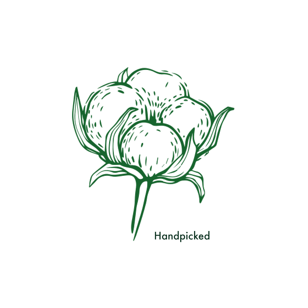 Handpicked - Egyptian cotton is handpicked, guaranteeing further purity. The lack of mechanical picking, allows the cotton buds to stay in tact, leaving no strain on the fibres.