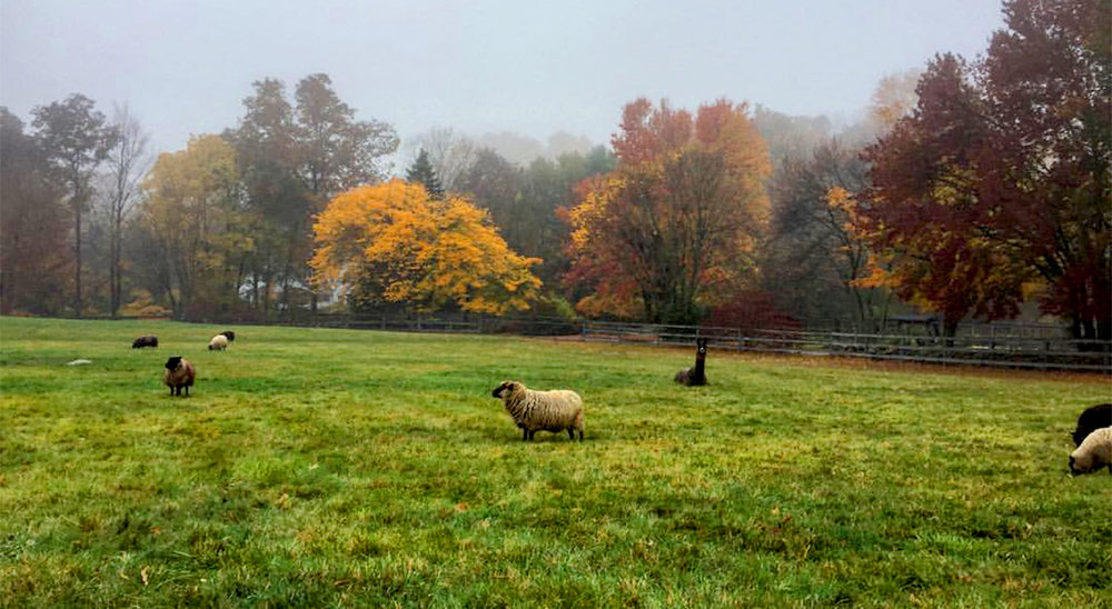 fall_sheep_mist1200px.jpg