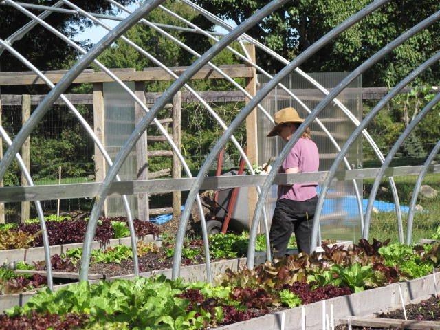 Garden Annie 2009.JPG