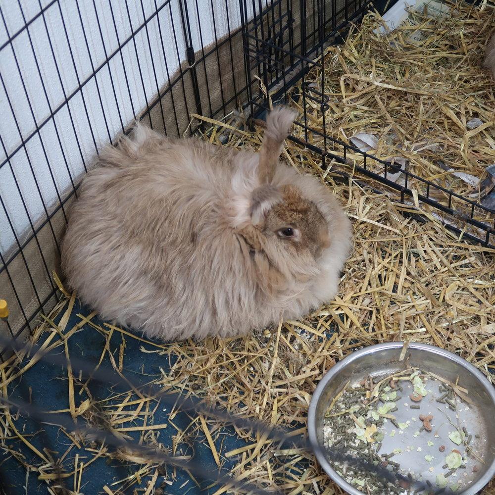 1 bunny.jpg