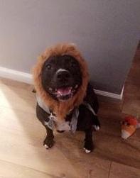 Tania's fur baby, Brooklyn, is ready for Halloween.