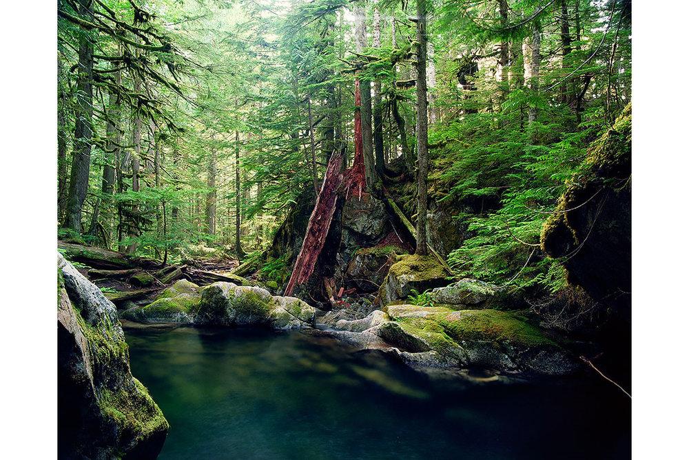 Seattle, Everett, Bellevue, Shoreline, Lynnwood, Edmonds, Bothell,  Washington, Pacific Northwest, Fine Art, Print, Art, Landscape, Environmental, Forest, PNW, Water, River