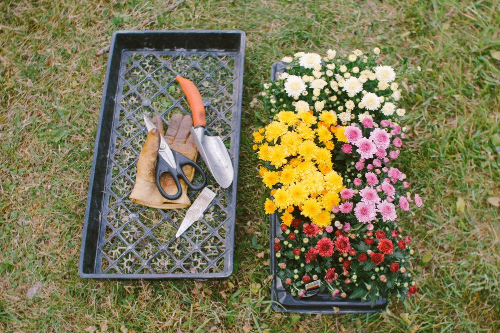 Small garden consultation -
