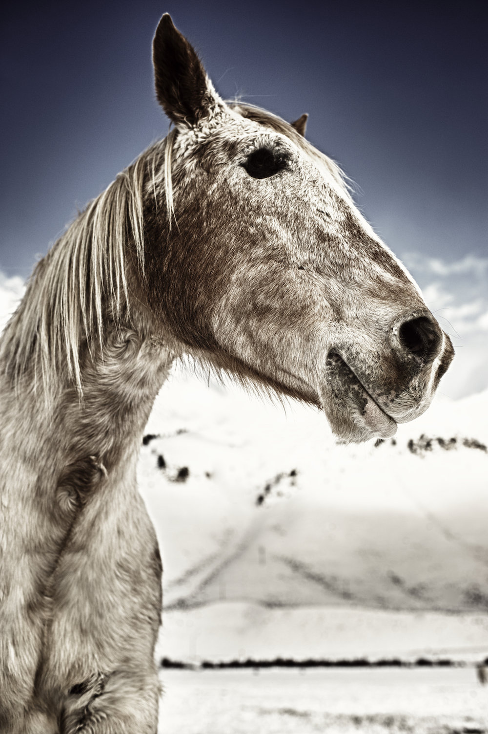 A horse is missing an eye in Jackson Hole, Wyoming.  Image by New Orleans based travel photographer, Marc Pagani