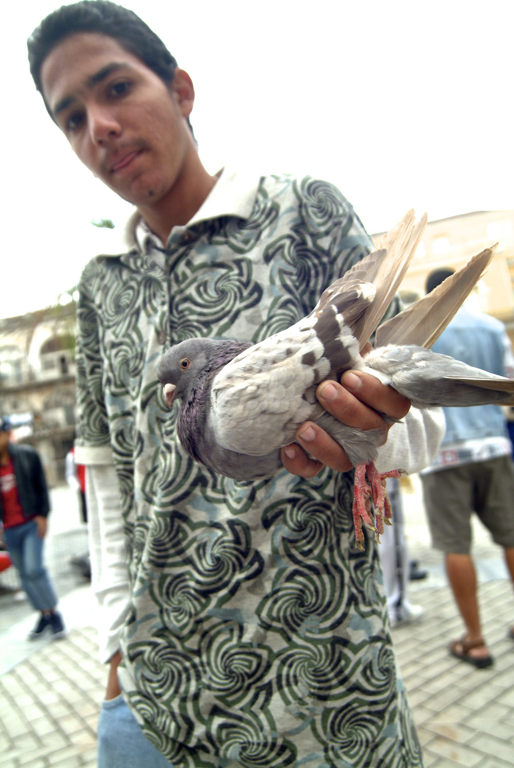 a boy shows his racing pigeon in Havana, Cuba.  Image by New Orleans based travel photographer, Marc Pagani