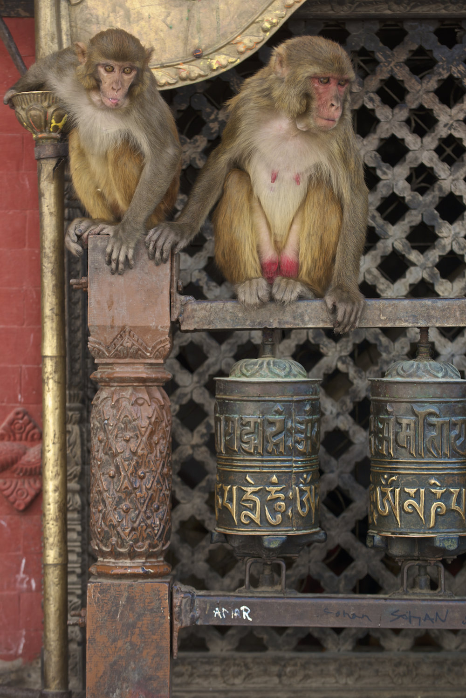 Monkeys at Swayambhunath Temple in Kathmandu, Nepal.  Image by New Orleans based travel photographer, Marc Pagani - marcpagani.com