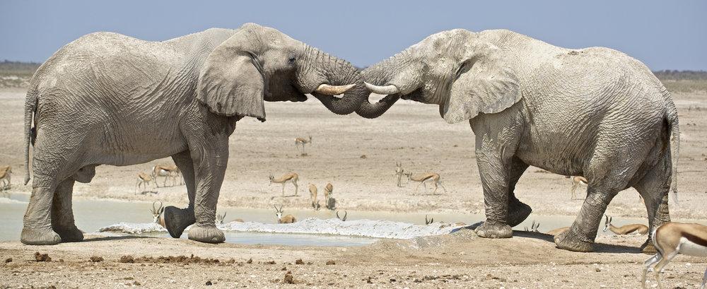 africa0001.jpg