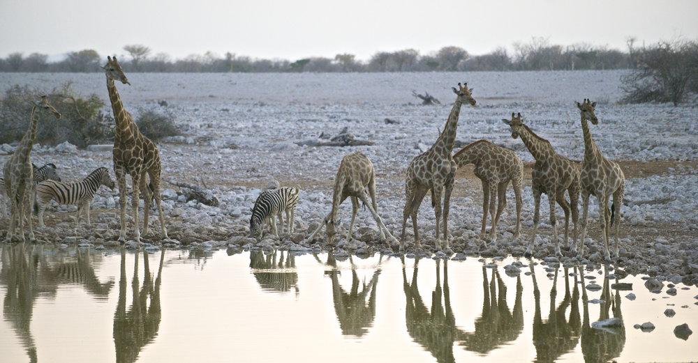 africa0036.jpg