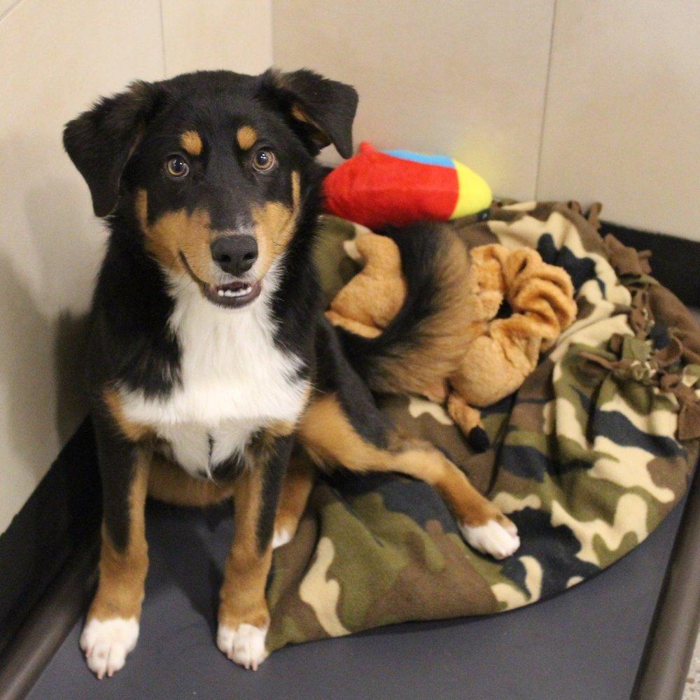 Ready to adopt? -
