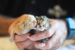 Al's kittens
