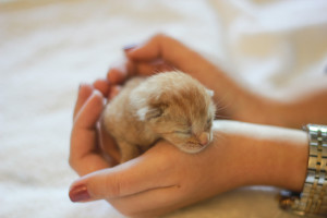 Al's orange kitten2