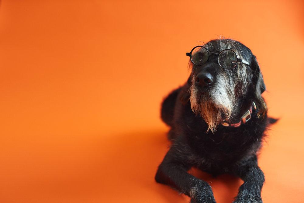Bacon orange with glasses.jpg