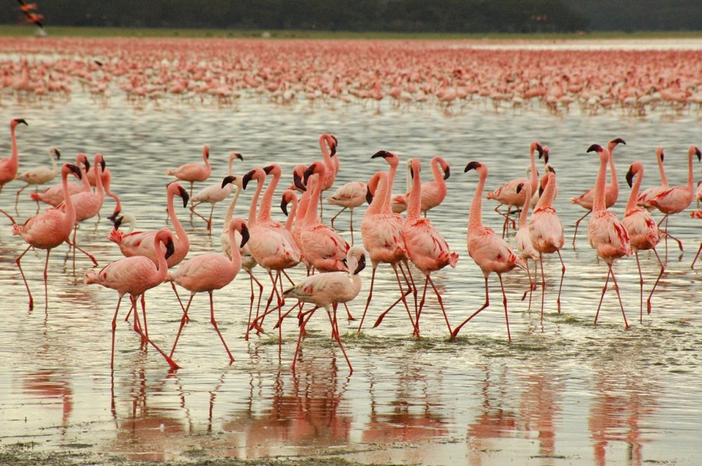 flamingos-1406103-1279x849.jpg