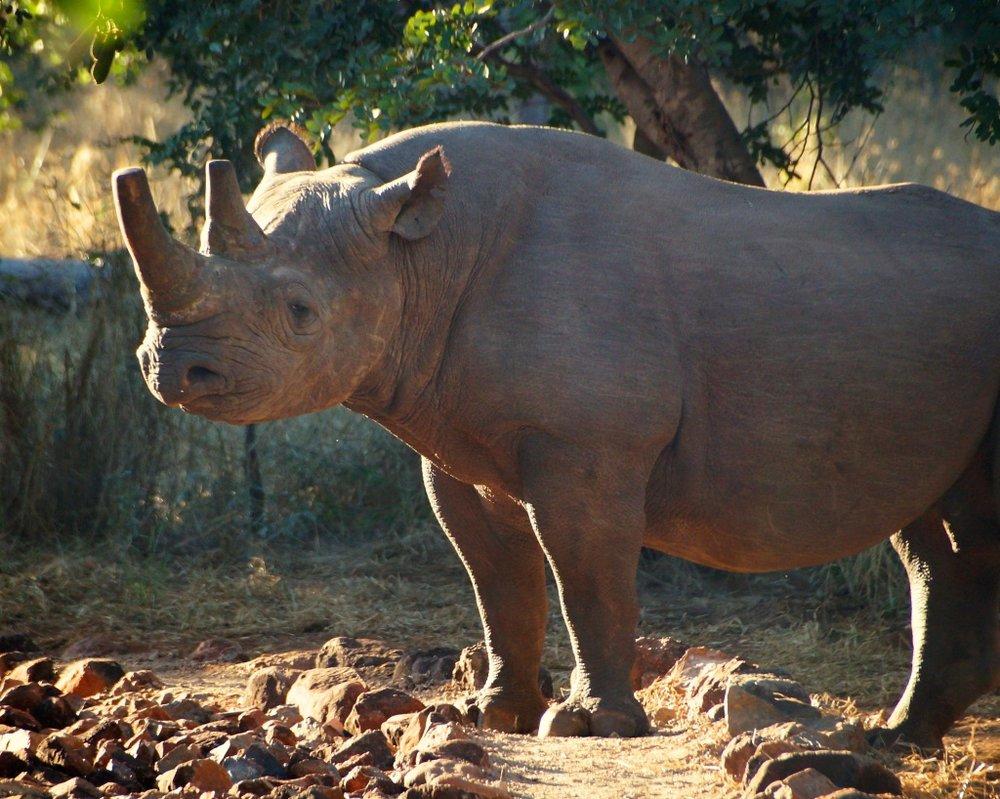 Rhino-BM.jpg