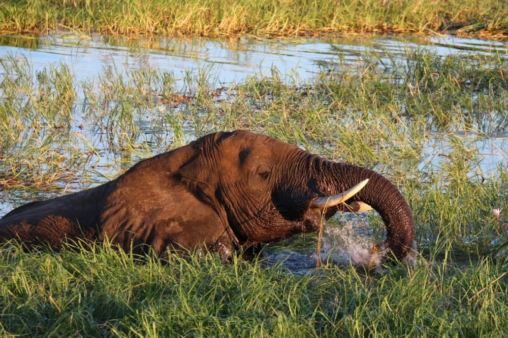 river-elephant-RE.jpg