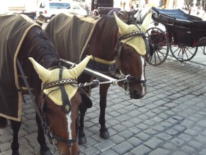 Horse earmuffs