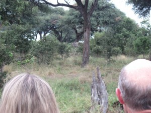 "Walking safari elephant - ""Babar"" (distant center of image)"