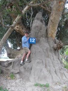 Okovango Delta termite mound
