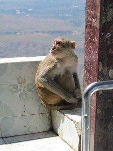 Mt Popa denizen (photo by Maia Coen)