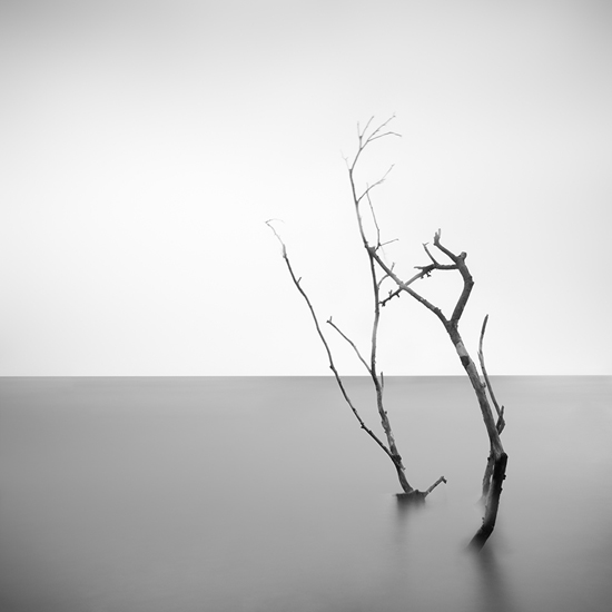Withered_07