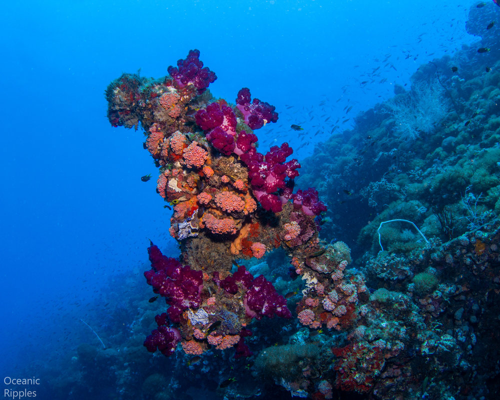 Coral Encrusted Feature of the SS Yongala Wreck