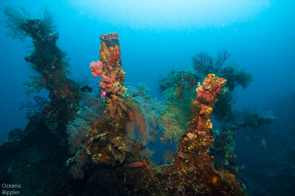 Copy of Liberty Wreck at Tulamben, Bali