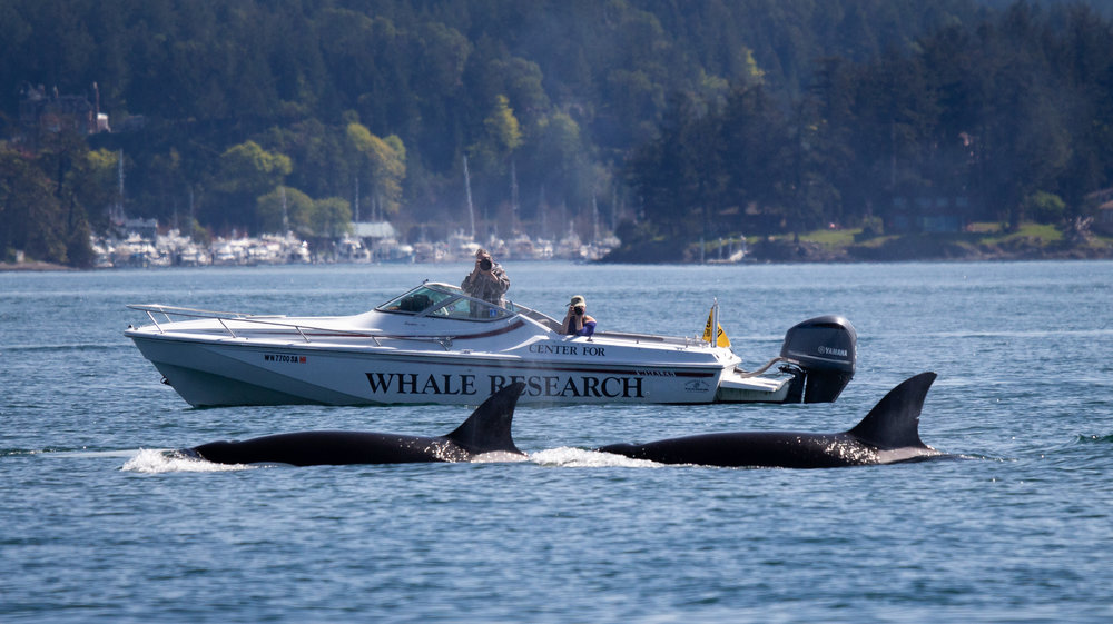 Whale scientists from the Center for the Whale research in action! Photo by Natalie Reichenbacher.