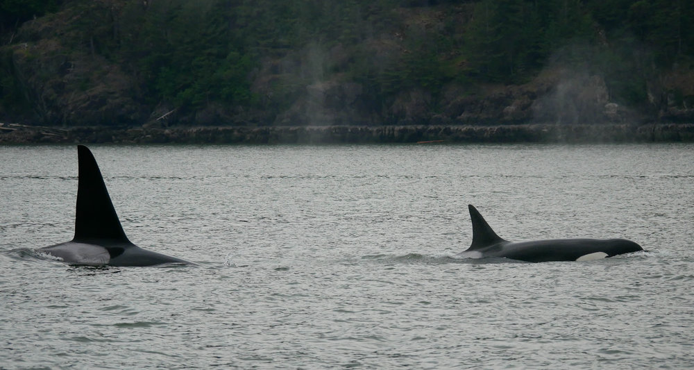 Son Beardslee was born in 1984 and his mother Reef was born in 1973. Photo by Rodrigo Menezes.