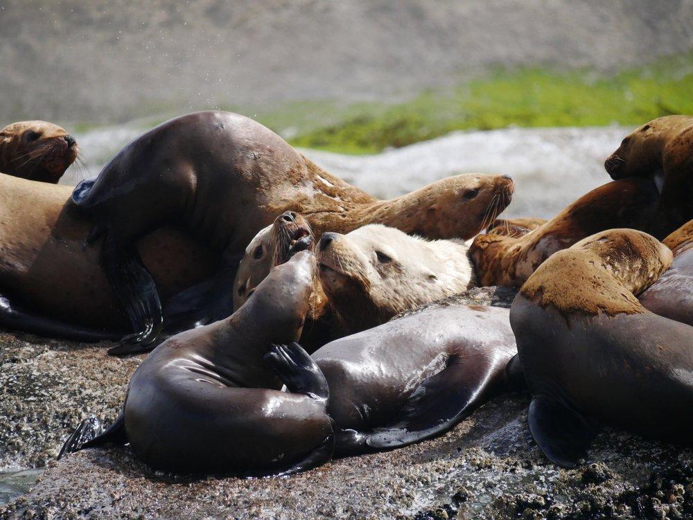 Cuddle puddle!Photo by Alanna Vivani.