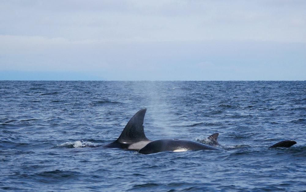 Breathing in that crisp Salish Sea air! Photo by Val Watson