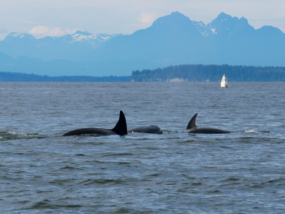 3 members of the family milling. Photo by Jenna Keen.