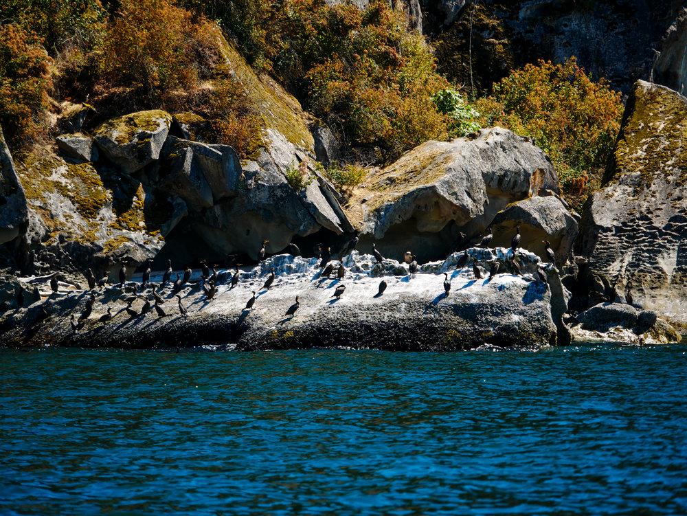 Cormorants resting on the sandstone bluffs. Photo by Alanna Vivani 10:30 tour