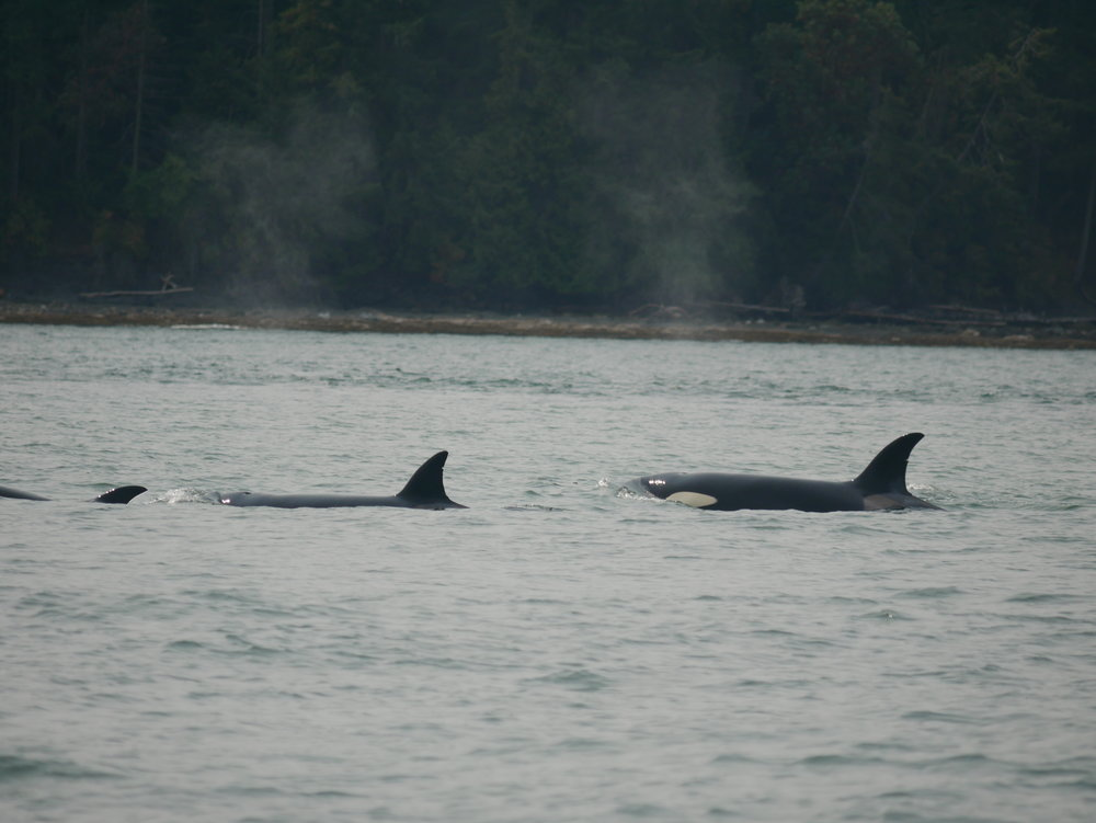 T36 Flapjack (left) and T36A1 Tierna (right) travelling together. Photo by Alanna Vivani.