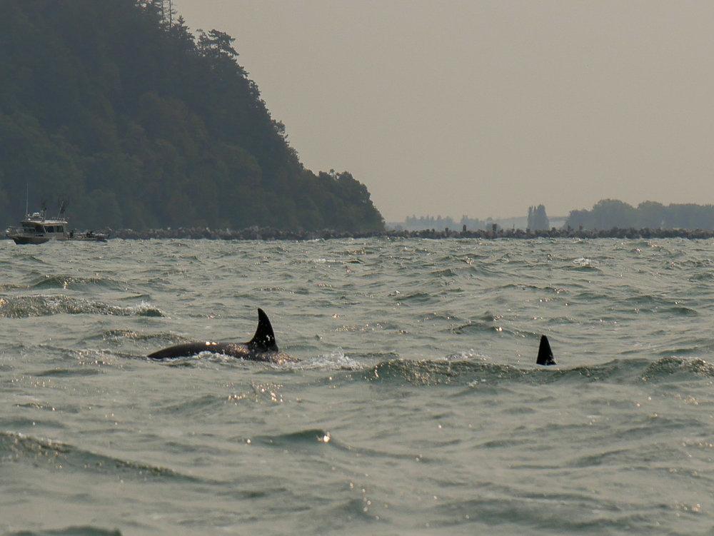 Diving down in the choppy waters. Photo by Rodrigo Menezes - 10:30 tour.