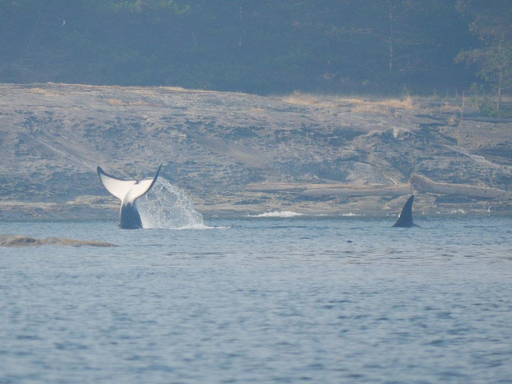 Fluke wave!Photo by Alanna Vivani