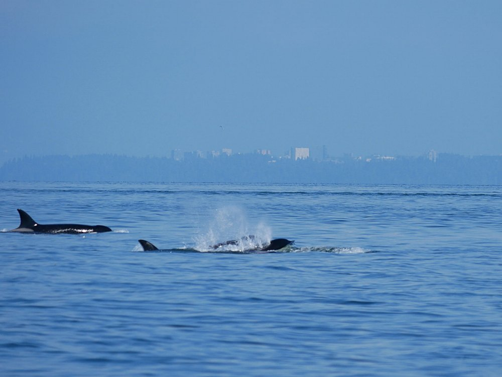 Big exhales after a dive! Photo by Rodrigo Menezes