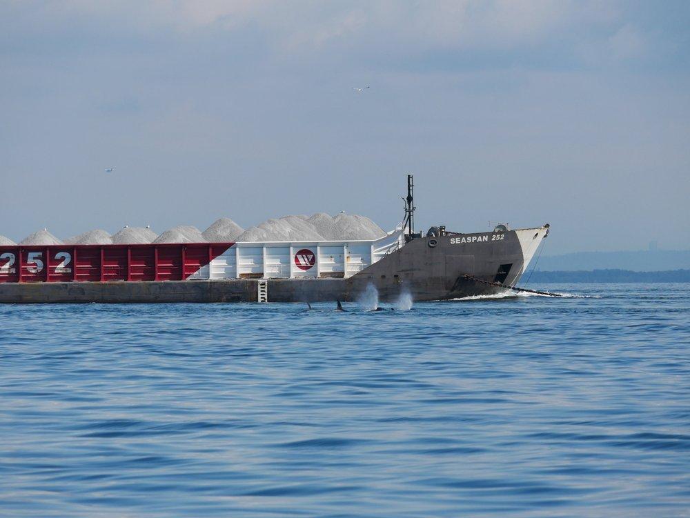 Urban whales! Photo by Rodrigo Menezes