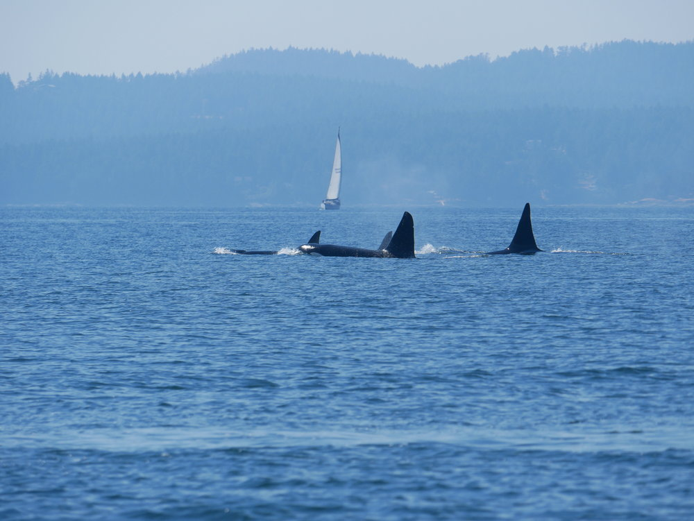 Tall black sails in front of a sailboat!Photo by Rodrigo Menezes