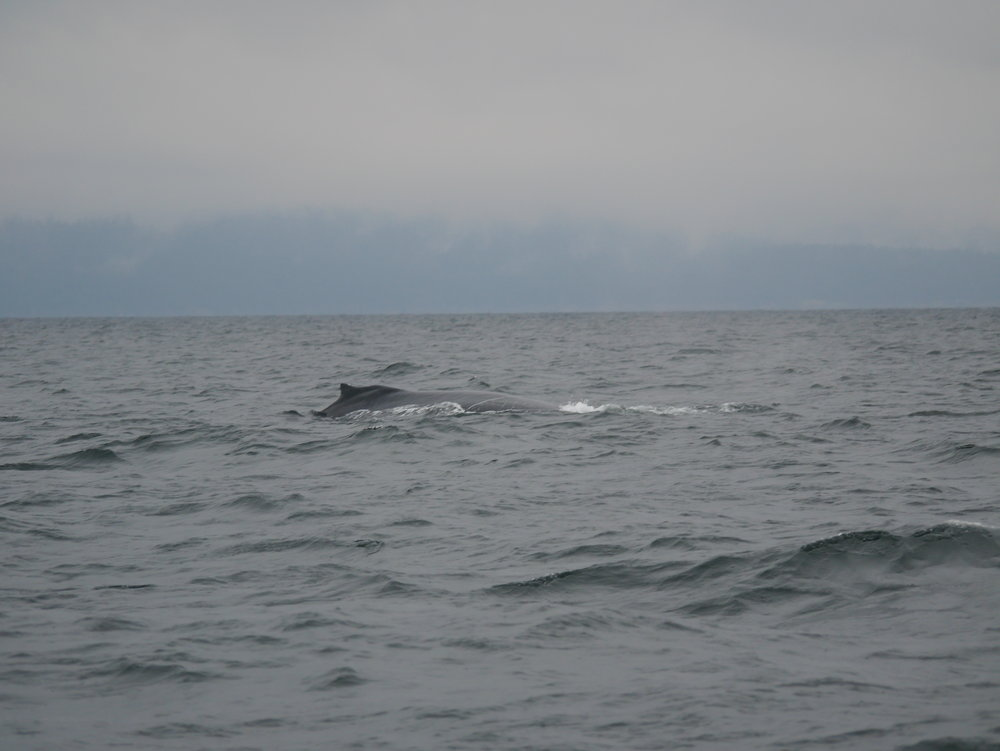 What a big whale! Photo by Jilann Campbell