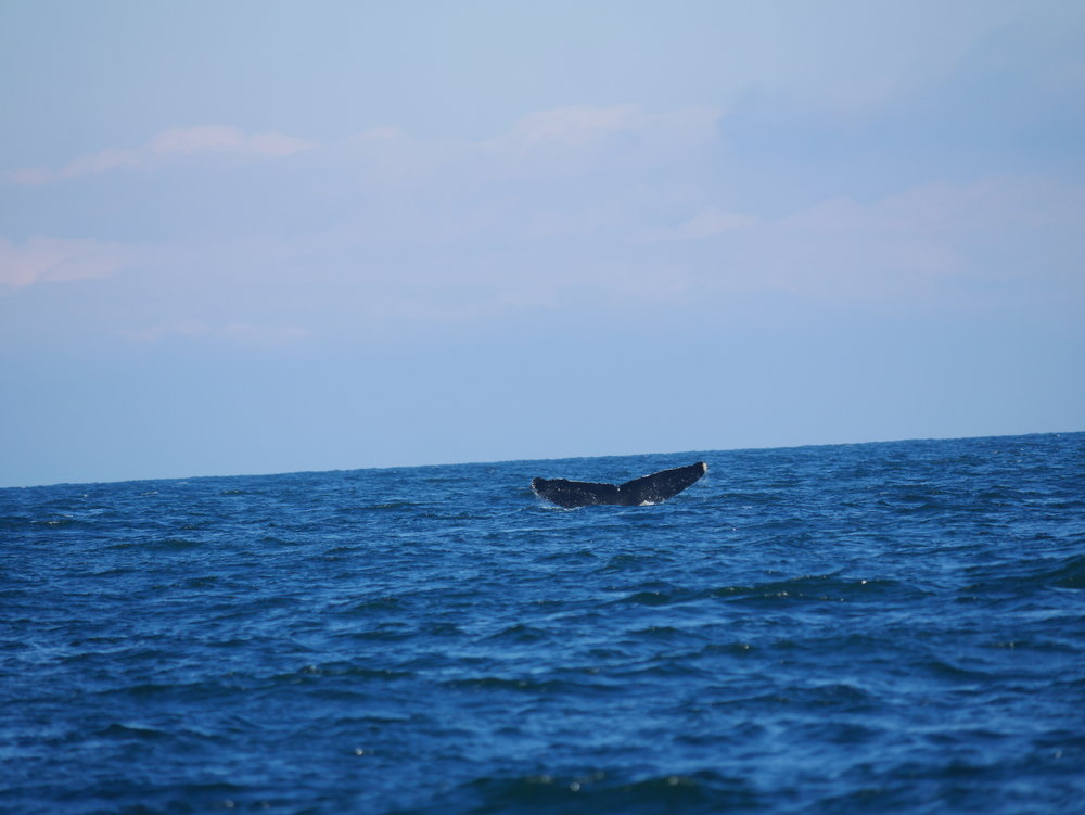 "Here's KEX0025 ""Slide"" taking a deep dive. Photo by Alanna Vivani"