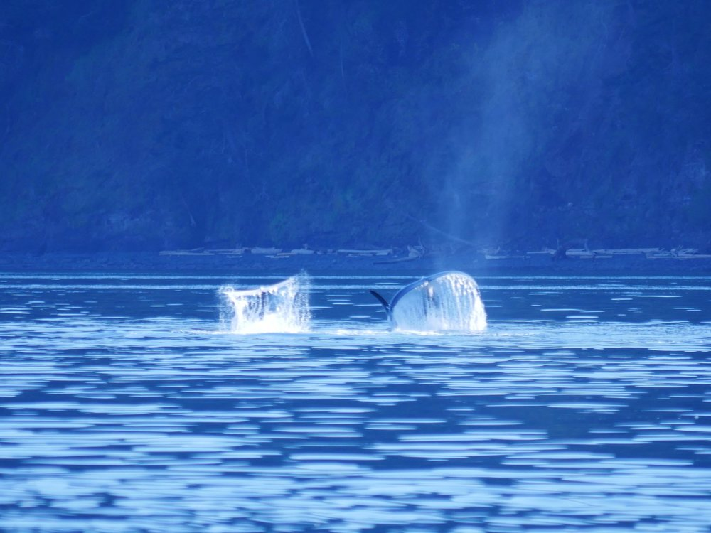 A couple of Orca Waterfalls.