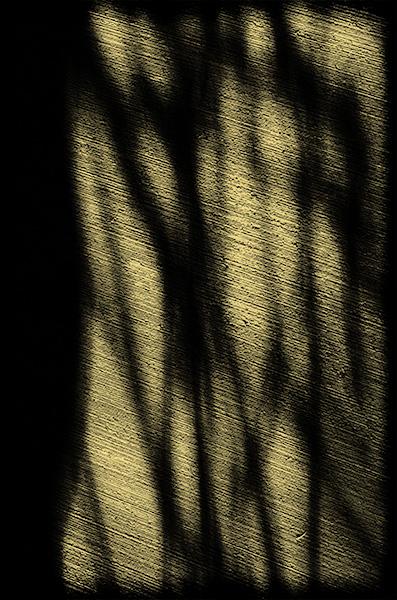Spirit of Ancient Trees III