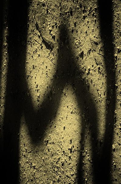 Spirit of Ancient Trees VI