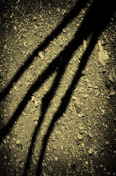 Spirit of Ancient Trees VII