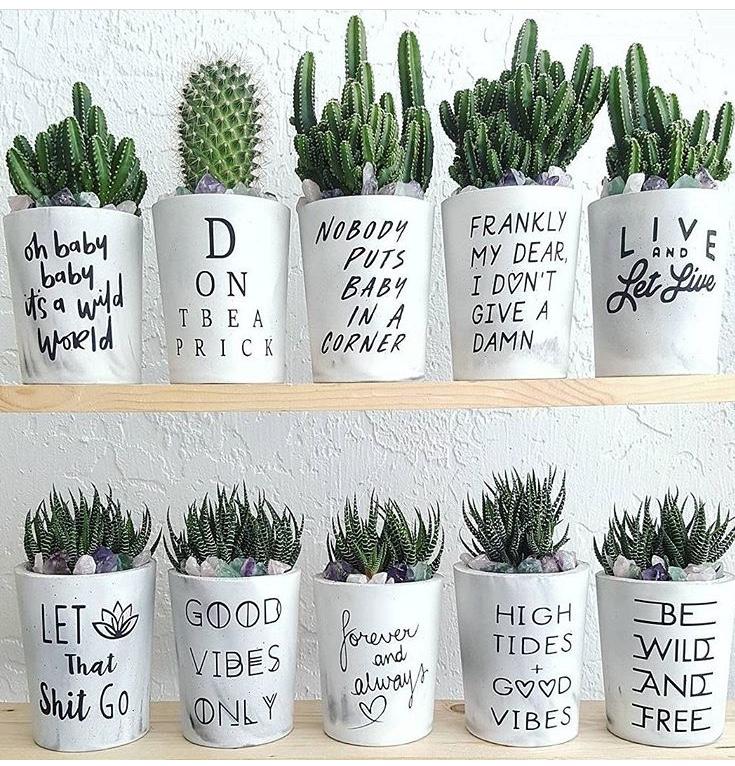 Photo:  The Tipsy Gardener Instagram
